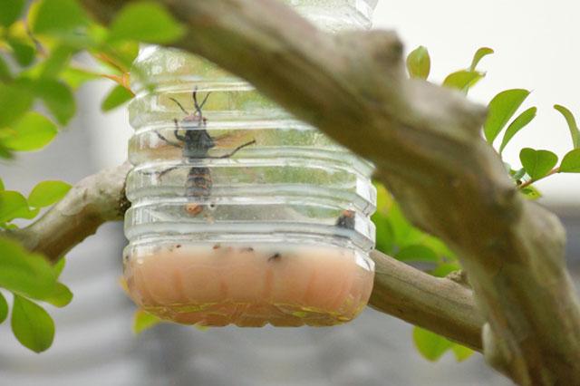 スズメバチトラップの画像2