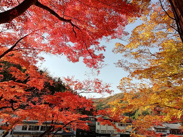 香嵐渓の紅葉 五色もみじ