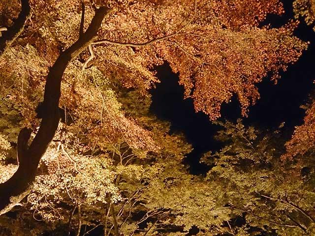 香嵐渓の紅葉 アイキャッチ画像