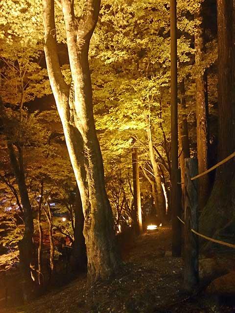 香嵐渓 遊歩道沿いのライトアップされた紅葉