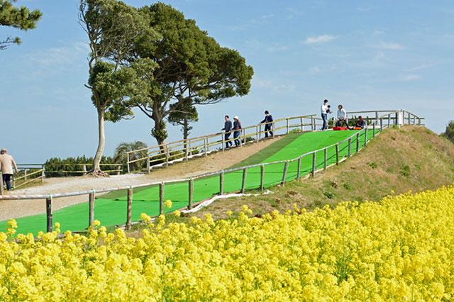 愛知県田原市「伊良湖菜の花ガーデン」 芝すべりの風景