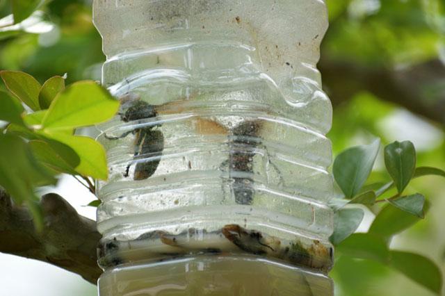 スズメバチトラップの画像3