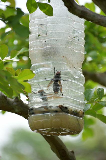スズメバチトラップの画像4