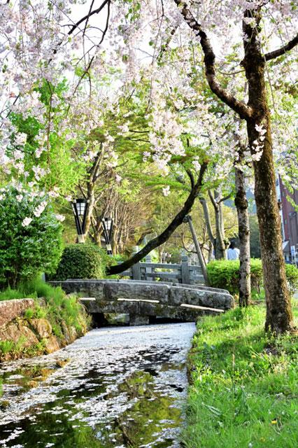 「ぎふ金華山ロープウェー」 岐阜公園内の桜並木