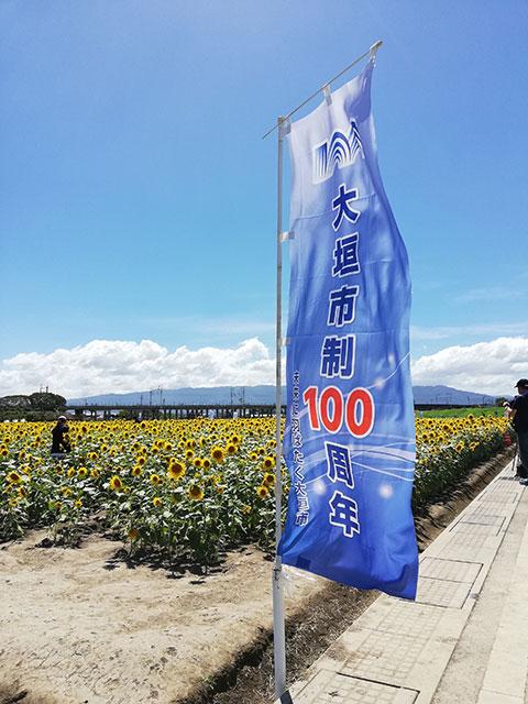 大垣ひまわり畑2018_大垣市制100周年ののぼり旗