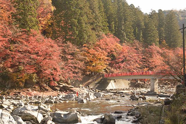 香嵐渓の紅葉 待月橋と巴川